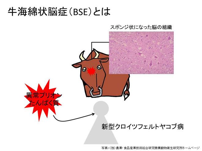 牛海綿状脳症(BSE)とは